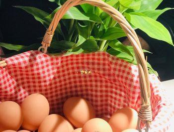 Happy World Egg Day